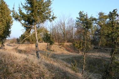 Pelouse calcicole I < Chermizy < Aisne < Picardie