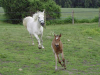 braine_centre_equestre_la_grange_galop