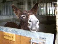 craonnelle_centre_equestre_chemin_des_dames_ane