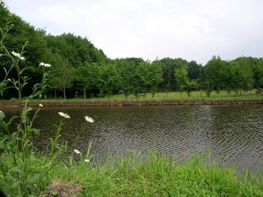 la resistante mondrepuis l'étang