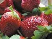voyenne_la_fraise_de_voyenne_fruits