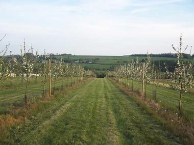 Clos de la Fontaine Hugo < Rozoy-sur-serre < Aisne < Picardie