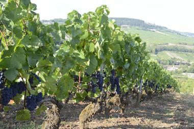 Gite-Bourgogne-au-coeur-des-vignes--11-