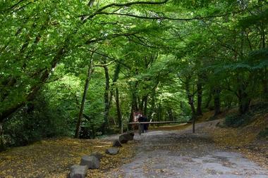Forêt de Brocéliande_Paimpont
