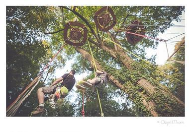 Grimpe-d-arbres-Bout-Branche