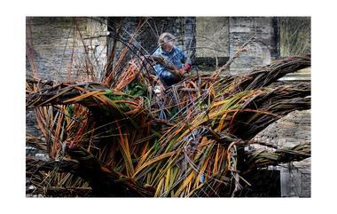 L-arbre-a-voeux---Trevor-Leat---Michel-Menguy--13-1