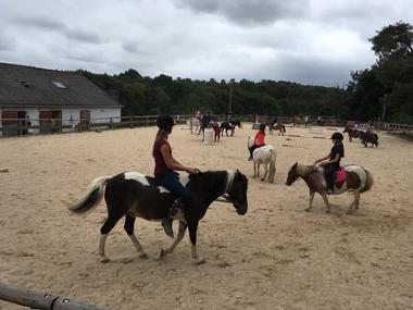 cheval broceliande - Tréhorenteuc - Brocéliande