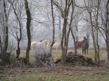 Cheval Brocéliande - Tréhorenteuc - Brocéliande