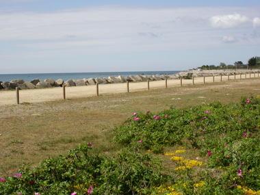 polder dune pointe de moust 2012 (12)