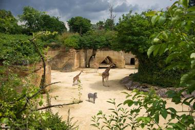 Camp-des-Girafes---Bioparc