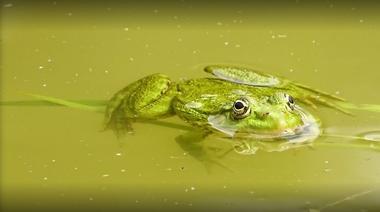 moncoutant-chambre-dhotes-domaine-de-letang-grenouille
