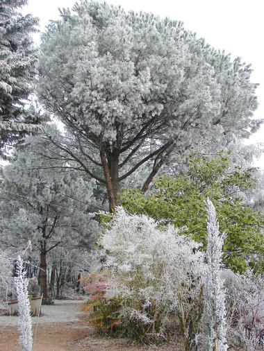 arboretum-1