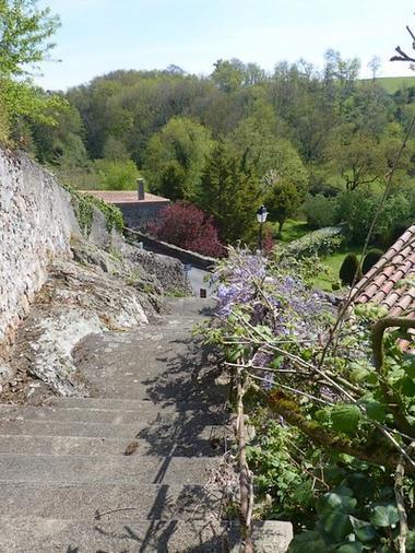 les glycines-escalier-sit.jpg_10