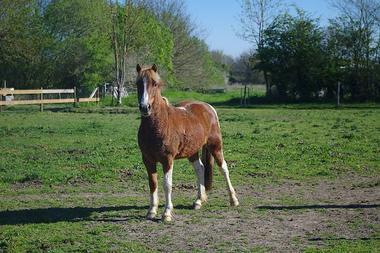 noirlieu-gite-du-chateau-cheval1.jpg_12