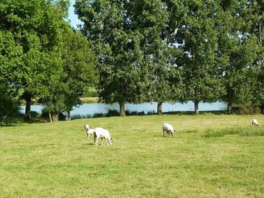 rorthais-gite-charmille-moutons©BenedicteBesnard.jpg_12