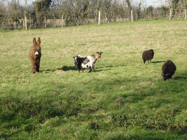 clesse-gite-puy-fleury-animaux.jpg_11