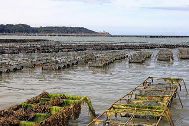 Huitre brassée mer - Baie de la Fresnaye - Plévenon - Baie de la Fresnaye