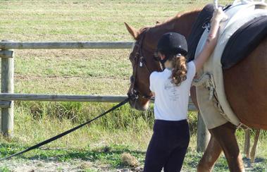 © les chevaux du coat plourivo