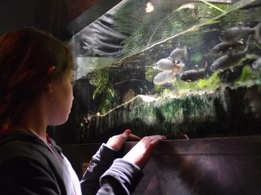aquarium curieux de nature 1 CRIR
