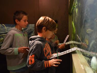 aquarium curieux de nature 2 CRIR