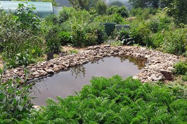 jardin-permaculture-bretagne-la-pature-es-chenes-1-2