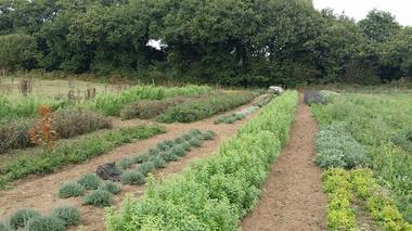 les jardins de Trelen -Ploneour -Lanvern