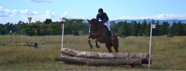 Centaure équitation 1
