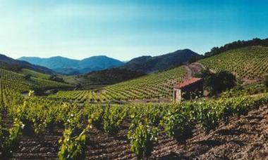 DEG - Roquebrun - Vin - Cave Roquebrun - vue du  Vignoble