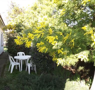Le jardinet à l'ombre des mimosas