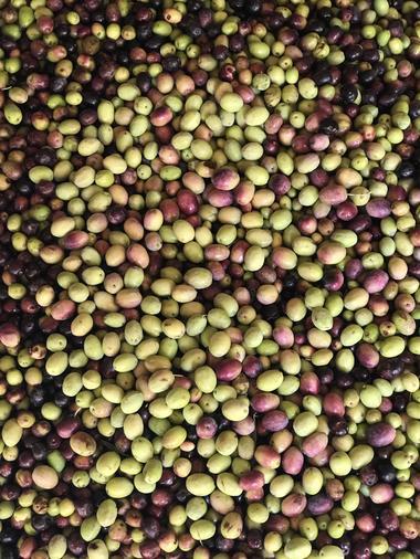 Olives, Domaine de Peilhan