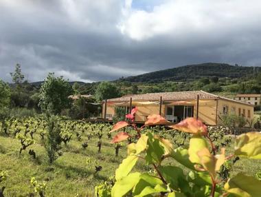 La-maison-du-ht-Languedoc-vignoble