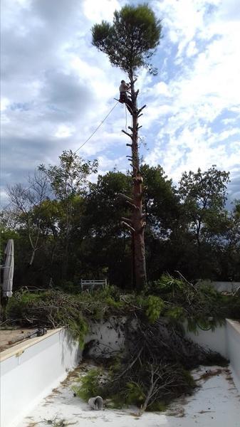 Pujol Elagage - Dans l'arbre