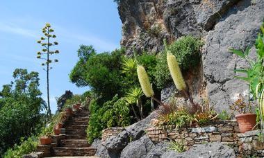 PCU - Jardin Méditérranéen - 003 - Agaves bracteosa