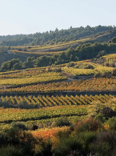 Photo 1ere P Puech de la Vigne Nègre