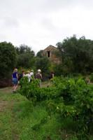 Pritemps à la ferme _LE Vieux Chai _ Balade