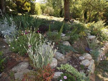 Fleurs de rocaille, dans le jardin.
