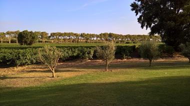 Vue sur les vignes, Domaine de Peilhan