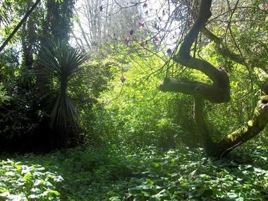Jardin exotique de l'île Tristan - Douarnenez - 29