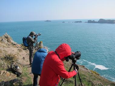 Birding Mont Saint-Michel - sorties ornithologiques