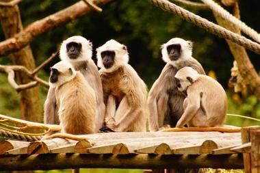Parc Zoologique de Trégomeur