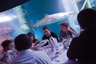 Dîner - Location Salle - Grand Aquarium - Saint-Malo