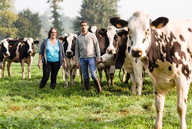 Ferme de Ville Pretre - Avec les Vaches