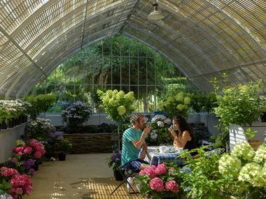 Hortensias - salon de thé - pépinière - Haut bois - Taupont - Bretagne