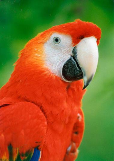 Parc Ornithologique de Bruz