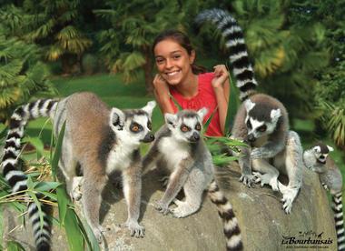 Le Parc Zoologique de la Bourbansais à Pleugueneuc, les lémuriens
