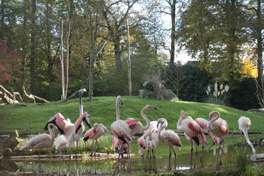 Flamants roses Zoo de la Bourbansais à Pleugeneuc