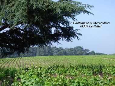 Le Vigneron du Muscadet - Cancale