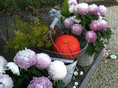 Le-Vieux-Logis-Vautier-Ginette-Saint-Briac-fleurs-potiron