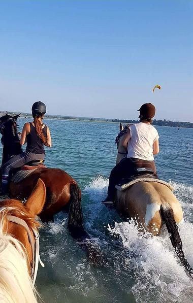 Ty-Haras-Lancieux-chevaux-dans-l-eau