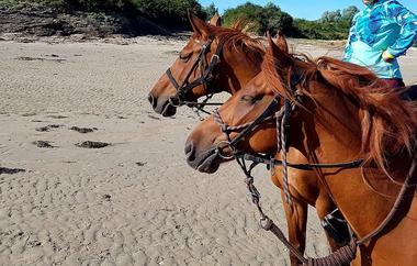 Ty-Haras-Lancieux-chevaux-sur-la-plage